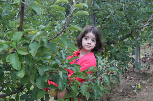 Cherry Hill Apple Orchards