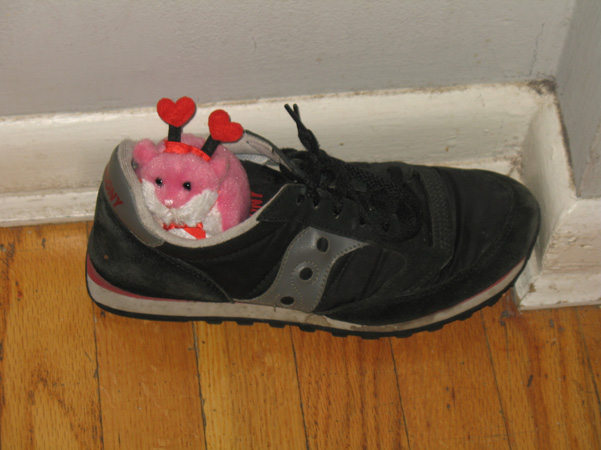 gerbil in shoe