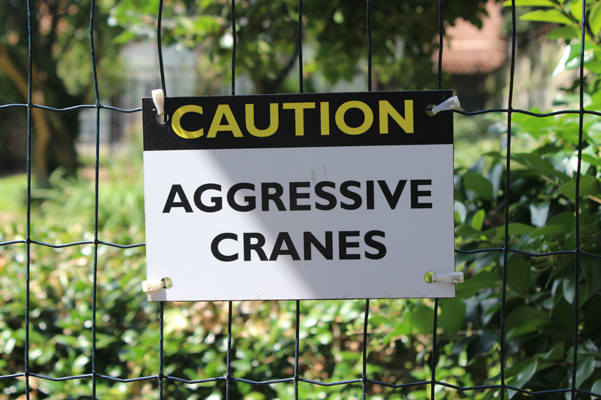 angry cranes